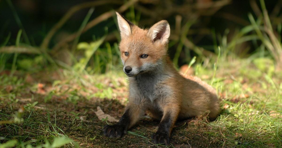 Dia Internacional da Vida Selvagem
