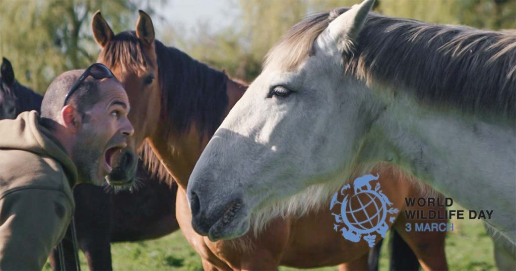 Dia Internacional do Animal Selvagem