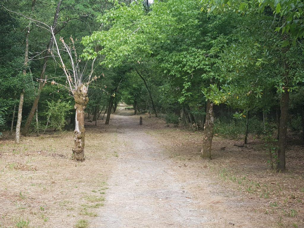 Mindfulness Caminhar com os sentidos
